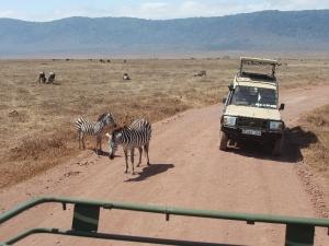 Zebry na ceste