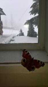 Motýľ na snehu
