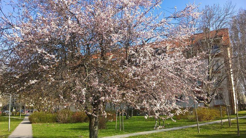 Jar v Krasňanoch