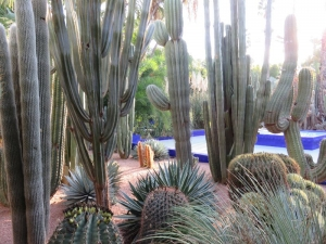 Záhrada YSL 4