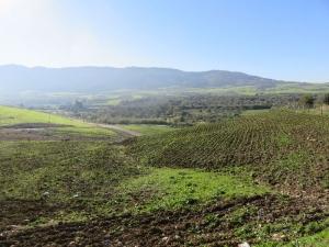 Zelené údolie 5